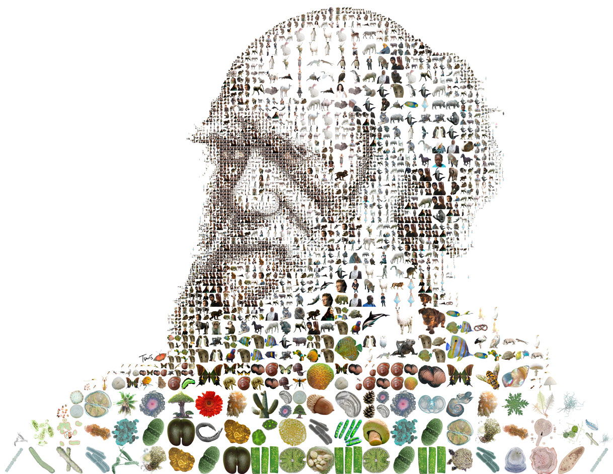 depiction of Charles Darwin as a grid view composed of fruits, plant, and other natural produce